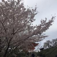 春爛漫♪♪