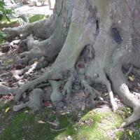 樹木が主役の写真ー18