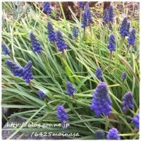 mainasa garden 僕らがひまわりを植える理由