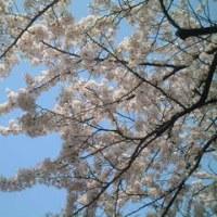 青空と桜と