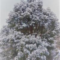 残り雪写真