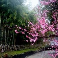 万博公園の春