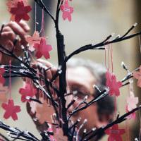 追悼の桜の木、キャンドル、そして祈り 2017年3月11日