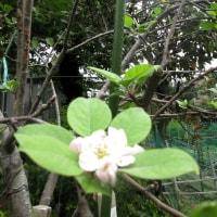 お花を楽しむサラちゃん 161024