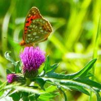 比企の里・・・嵐山町・・・菅谷館跡・蝶の里公園・・・チョウに逢いたくて徘徊チュウ