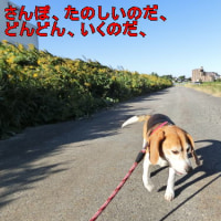 今日は快晴、散歩日和です