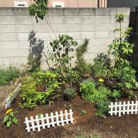 在来種の庭づくり2(アースデイ・エブリデイ)