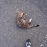 猫の日は朝焼け