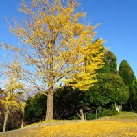 いつもの公園 花博記念公園 鶴見緑地