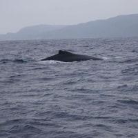 クジラ~♪