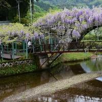 西寒田神社のふじの花