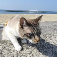 アズキさん、kikiさん せんなん里海公園で散歩。