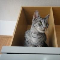 猫科の機嫌
