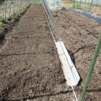 野菜畑のこと7