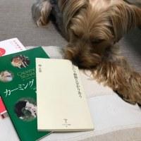 父さんの勉強