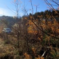 非日常の光景の写真を撮りに遠くの森の中へ行く