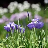昨日は名古屋へ。。。ニコンカレッジ「春の風景」の最終回☆