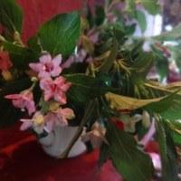 インドアの植物の置き場所