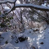 天城山(天城高原ゴルフ場口)~静岡県伊豆市