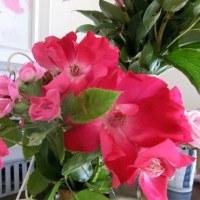 また貰った花*アマリリス