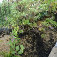 交野体験工房に加えて、庭づくりもしましています。
