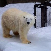 冬の旭山動物園へ