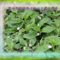 『 富みたるは狂ぶれ心に花と散る 』つれづれ575qw1011