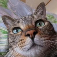 チマクンの鼻の穴