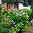 山百合と向日葵