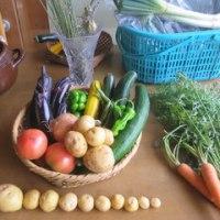 じゃがいも堀りと朝どり夏野菜の試食会