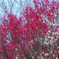 Gifu / Bairin Park (梅林公園)