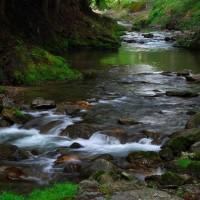 渓流・久多川