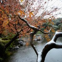 旧古河庭園 紅葉に雪・・4