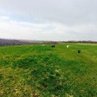 017.4.27(木)大草原の緑が濃くなってきました