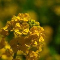 今年は蜜バチが少なかったように思います。 (Photo No.11809)