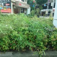 分離帯の野草