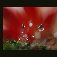 滴の中の紅葉