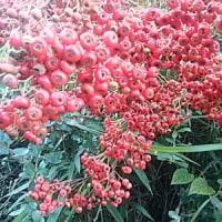 今朝は、スッポリと、秋色に。・・・・