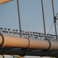 12月3日の鳥撮り夕暮れ散歩・・・