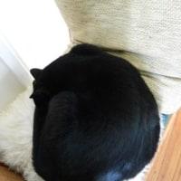 4コマ劇場:猫の座席指定
