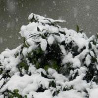 季節外れの「雪」