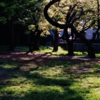 今日の井の頭公園