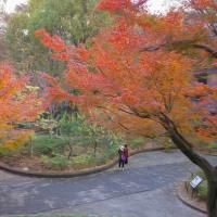 2016.12.01 新宿中央公園の紅葉