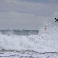 1月14日  荒海のカモメ