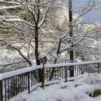 雪の中で…