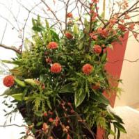 ノラーズと梅の花