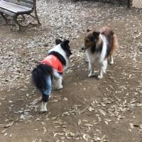 公園のお友達とムキ〜〜なメイプル