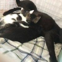 天井裏で生まれた子猫たち