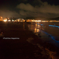 逗子海岸の夜光虫