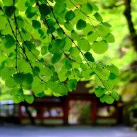 嫌なこともあれば、いいこともある-京都市左京区:貴船神社